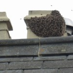 2014 seems to be a busy year for bees